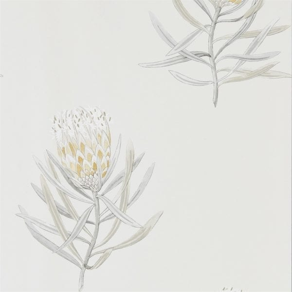 Willow Bloom Home Protea Daffodil:Natural Wallpaper